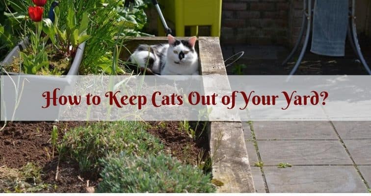 How to Keep Cats Out of Your Yard? | Igra World