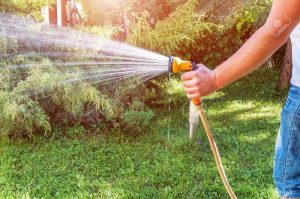 Watering plants with garden hose